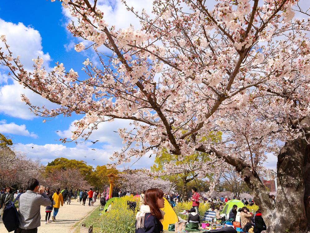 【舞鶴公園・大濠公園】散歩ついでに桜とお城を堪能