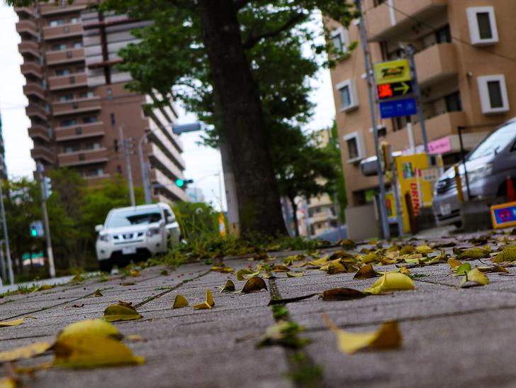 【南区大楠2丁目】静かな並木道をゆったり散歩:地面と落ち葉