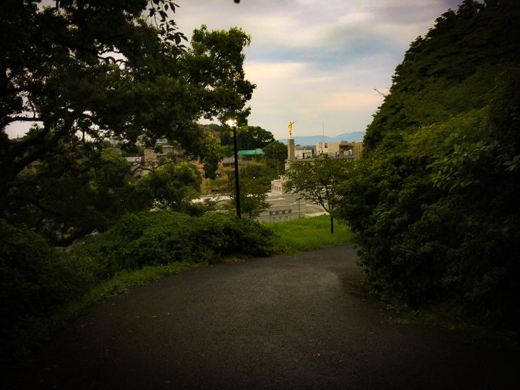 木の間からの景色
