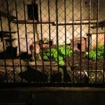 夜の動物たちを観察できる夏限定イベント「夜の動植物園」に行ってきた(福岡散歩サークル)