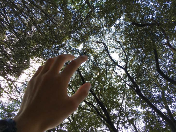 木漏れ日が美しい