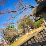 【六本松・谷】丘の上の穏やかな公園「谷公園」で過ごす昼休み