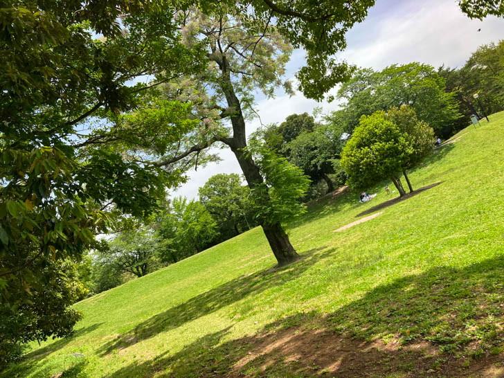 芝生公園。ここでは家族連れがキャッキャしていた