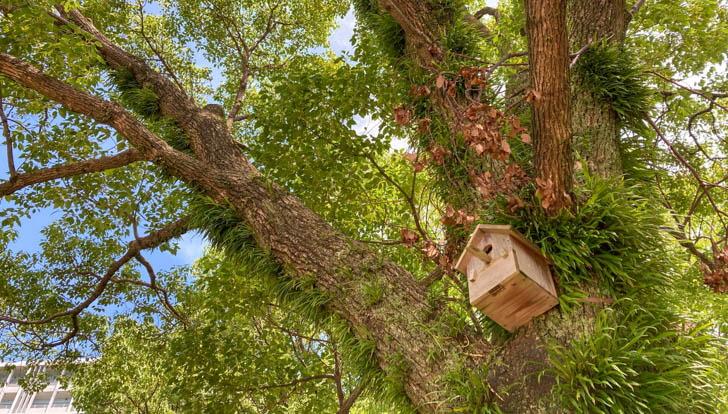 鳥の巣箱が多数設置されている