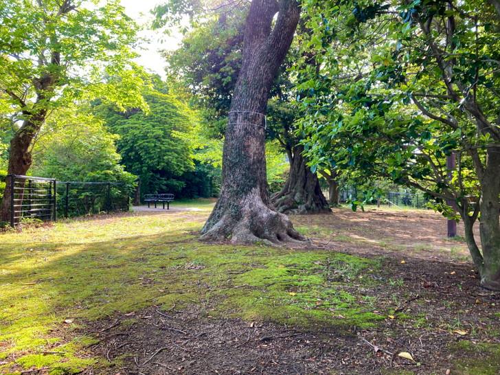太く大きい木が目立つ