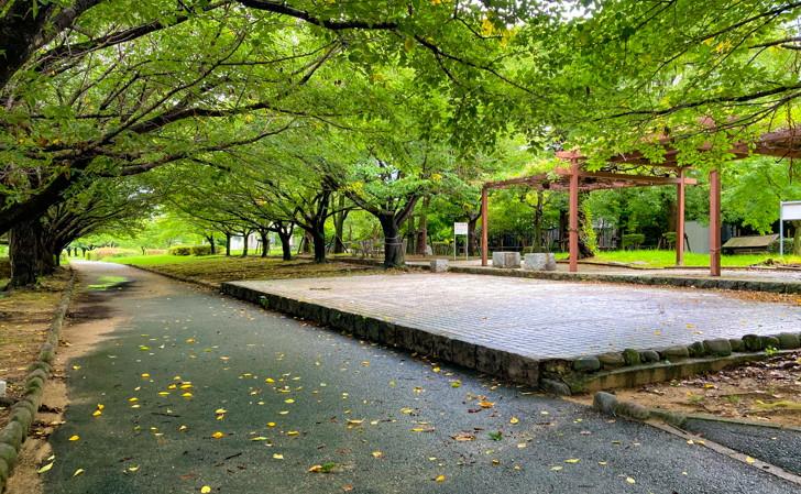 【南区】那珂川の濁流を楽しめる「那珂川河畔公園」を散策 生い茂った木々に囲まれた空間